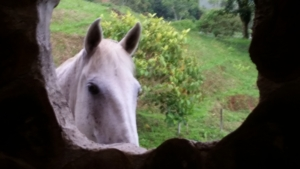The horses at Casa Tordesillas (1)
