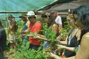 Learning-about-reforestation-with-Community-Carbon-Trees
