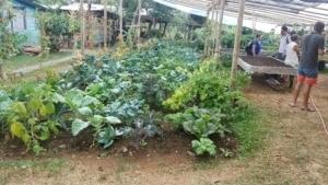 Organic food production at M and B Organico (2)