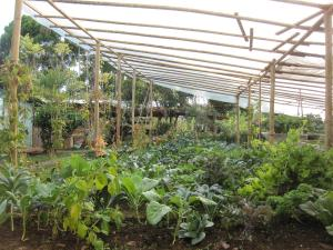 Sustainable Living Expedition with Upward Spirals 2017 Feb (138)