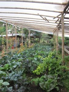 Sustainable Living Expedition with Upward Spirals 2017 Feb (153)